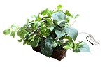 House Plant Hidden WiFi Camera With 20 Hour Battery